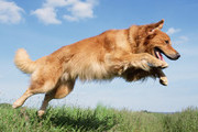 Active Dog Breeds For Retirees