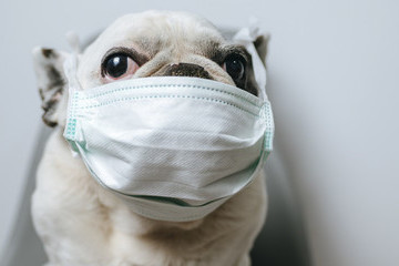 These Quarantine Dog Memes Will Make Your Day A Little Brighter