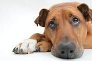 Warning Signs That Your Dog Needs Help