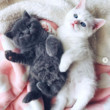 Kittens For The Happy