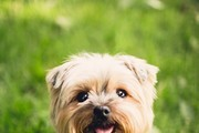 Must-Have Products For Dog Lovers