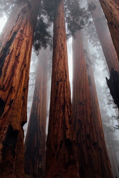 Redwood National Park Is Created