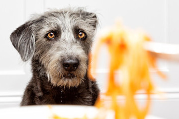 Popcorn And Other Foods Your Dog Can Eat But Probably Shouldn't