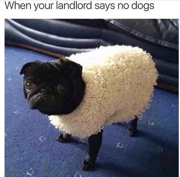 When Your Landlord Says No Dogs